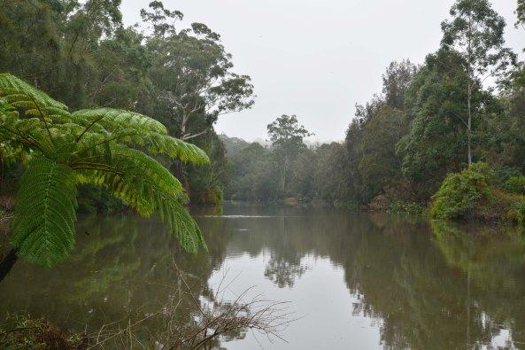 Lane cove river mist